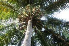 Florida_20140715_064